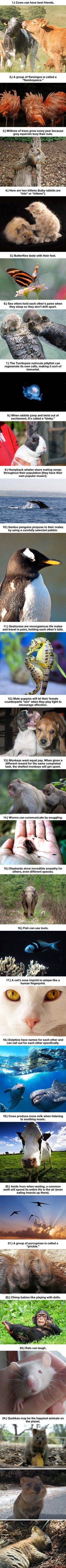 24 Awesome Things You Didn't Know About Animals