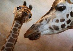 kiss photo!!