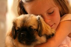 Are you in the mood to see some adorable photos of Pekingese puppies? This is a list of some of the cutest Pekingese puppies ever. Pekingese Puppies For Sale, Little Puppies, Cute Dogs And Puppies, Adorable Puppies, Doggies, Funny Puppy Memes, Funny Dogs, Cute Dogs Breeds, Dog Breeds