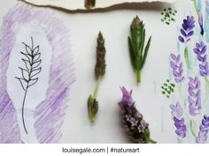 Love of lavender page in my #natureart sketchbook, motifs, buds, watercolor