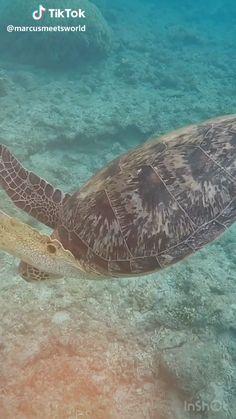 Sea Turtle Diet, Turtle Life, Turtle Quotes, Sea Turtle Wallpaper, Animals Beautiful, Cute Animals, Wild Animals Pictures, Nature Pictures, Ocean Video