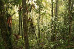 Support and don't forget to save the rainforest...it has gone out of fashion but it is still very much under threat!