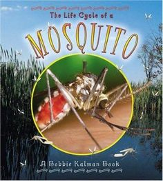 Close-up photos and detailed descrpition of the life cycle of a mosquito.