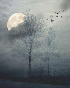 Blanco noche