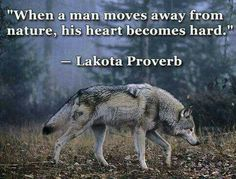 Native American Proverbs More