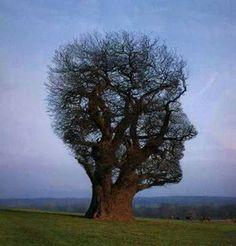 I love tree.