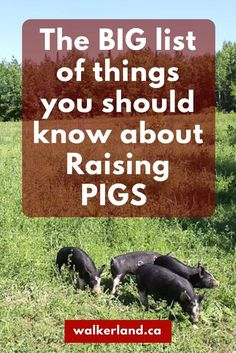 We love raising pigs so much that we have put together a comprehensive list to help you get started with raising some of your own pigs!