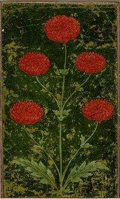 "rrukk: ""antiquememes: Date: (circa) Schools /Styles: Mughal Style Period/Culture: Islamic Description: Painting. On paper. Botanical Illustration, Botanical Prints, Illustration Art, Illustrations, Botanical Drawings, Art Floral, Imagines, Oeuvre D'art, Fresco"