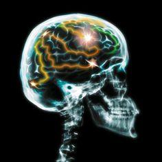 Fit im Kopf – erfolgreich im Job. Die Schaltstellen zwischen den Nervenzellen im Gehirn sorgen für die blitzschnelle Informationsübermittlung, wenn sie regelmäßig gefordert werden. Foto: djd/National Geografic Channel