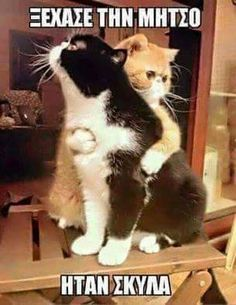 Funny Animal Pictures Of The Day 25 Pics - Funny Animal Quotes - - Funny Animal Pictures Of The Day 25 Pics The post Funny Animal Pictures Of The Day 25 Pics appeared first on Gag Dad. Funny Animal Quotes, Cute Funny Animals, Funny Animal Pictures, Funny Cute, Hilarious, I Love Cats, Crazy Cats, Cool Cats, Kittens Cutest
