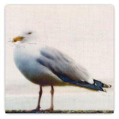 CAROLYN SAXBY: seagull on linen