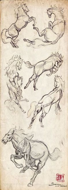 How to draw horses. My friend Meghan really loves horses, so I geuss that I gonna to make a horse sketch for her!: