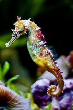 I'm strangely attracted to this photo. Sea Horse.