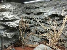 Pana Stachtidis, Germany Rock Background, Aquarium Landscape, Vivarium, Geckos, Dwarf, Tortoise, Backgrounds, Germany, Houses