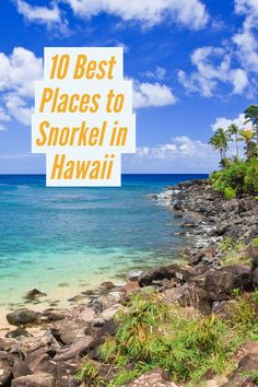 Where to snorkel with turtles, manta rays and spinner dolphins all around Hawaii