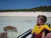 Sampson Cay...swimming pigs