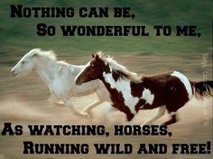 Breaking A Wild Horse Quotes. QuotesGram