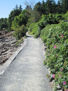 Here are 6 fun and easy hikes in and around Acadia National Park on Mount Desert Island.  The hikes are divided by location: near Bar Harbor, Jordan Pond House, and the Quiet Side, Bass Harbor area. Enjoy the hikes and the nearby attractions and you will see many of the highlights of the park.