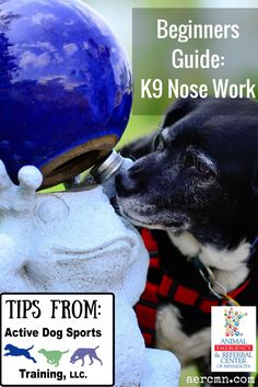 Are you interested in K9 Nose Work? Sharon, a Certified Nose Work Instructor at Active Dog Sports Training, LLC has a few tips for beginners looking to get their dogs into nose work! Learn more here: aercmn.com/... #dogs #dogtraining #nosework