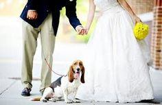 Wedding moments with Basset Hound