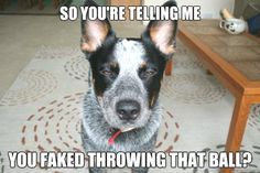 There's a reason dogs are mans best friend | RoyReid.ca – Everything the internet was never intended to be used for…