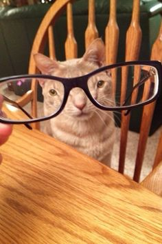Cat Whose Eyes Are Smaller Than Everything | 31 Cats You Won't Believe Actually Exist