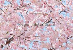 Pink Blossoms 00155 | fotobehang Ideal-Decor Poster van Ideal Decor | kleurmijninterieur.nl