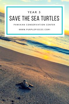 Save the Sea Turtles Year 3 (Pawikan Conservation Center, Morong Bataan, Philippines  #seaturtles #turtlesanctuary #philippines