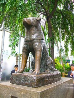 Almost 100 Years Ago, This Dog's Death Was Mourned By Thousands. His Story Brought Me To Tears. Hachiko, Japanese Dogs, The Loyal, Loyal Dogs, Faith In Love, Beautiful Stories, Old Dogs, Sweet Memories, Akita