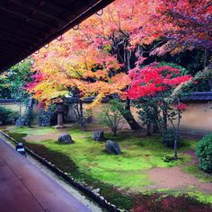 Nice greenspace but put more short hedges on the ground Mini Plantas, Temple Gardens, Japanese Garden Design, Japanese Gardens, Japanese Art, Japan Garden, Garden Theme, Backyard Landscaping, Landscaping Ideas