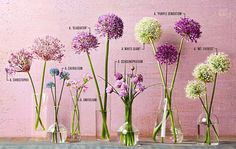 Perennials If you've ever watered a pot of chives, you've grown alliums (aka ornamental onions). Now meet the rest of the family. - If you've ever watered a pot of chives, you've grown alliums (aka ornamental onions). Now meet the rest of the family. Garden Bulbs, Planting Bulbs, Planting Flowers, Flowers Garden, Garden Shade, Summer Flowers, Peonies Garden, Art Flowers, Small Flowers