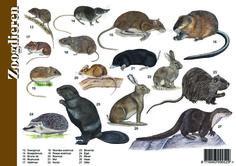 Herkenningskaart / zoekkaart Zoogdieren (achterzijde) All About Animals, Animals For Kids, Animals And Pets, Nature Hunt, All Nature, I Love School, Fauna, Creative Kids, Natural History