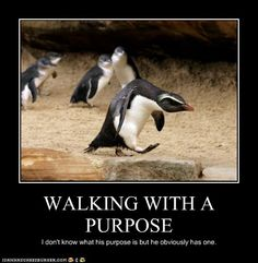 Penguin on a mission - his face!  bahaha!