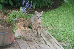 florida wild life | Dave Barry's Blog: FLORIDA WILDLIFE