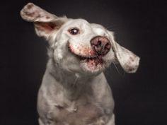 Кристиан Вилер снимает удивительно смешные выражения морд собак https://rusevik.ru/news/360195