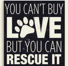 Please don't shop - adopt!