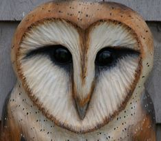 Beautiful Barn Owl - my Sister's favorite... It used to be mine because of the heart-shaped face.  Then I discovered the Snowy Owl, which heretofore, I had assumed was the Barn Owl in Winter!  Silly me...at 65 I should have known better.(but foxes turn white in winter...) I still love the Barn Owl, though he's beautiful.