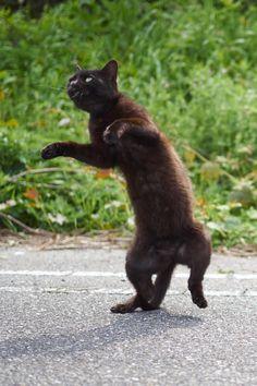 黒猫の撮影は難しいとよく言われるので、「じゃあ動きつけてかっこよく撮ったろうじゃん」と思ったけど なんか、こう、マヌケにしか写らないんですがこいつら - ツイナビ | ツイッター(Twitter)ガイド