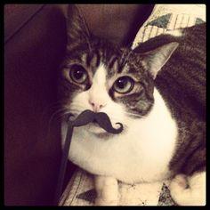 I like the way the cat looks like she's in on the joke.