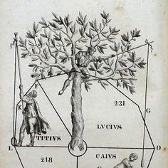 Tavola che rappresenta le distanze tra podere e podere e il modo di misurarle:  Rugginello Giulio Cesare, De Arboribus Controversiis (Maceratae, Ex Off. P. Mascalchi, 1841)  www.libreriabonfanti.it