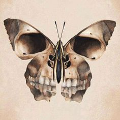 I seriously want this tattoo because of the design and detail and also because of the butterfly project and I like skulls :3