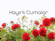 Gül Resimli Cuma Mesajları Best Frends, Islam, Plants, Youtube, Flora, Muslim, Plant, Youtubers, Youtube Movies