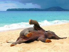 This baby elephant is loving the day at the beach!