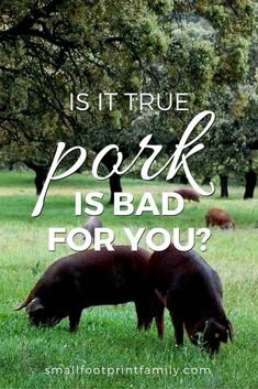 Is pork bad for you? Or is how healthy it is more a matter of how it is raised and prepared? This article will help you decide.  #paleo #paleodiet #westonprice #foodismedicine #nutrition #realfood #pastureraised #localfarms #localfood #keto #healthyliving #naturalliving #organicfood