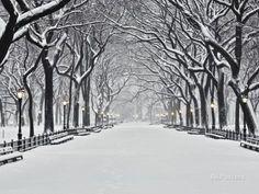 Central Park en hiver, New York Papier Photo