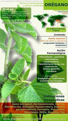 Propiedades medicinales y usos del orégano
