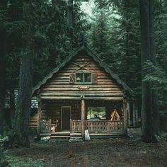 Beautiful woodland cabin.