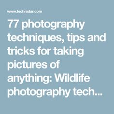 77 photography techniques, tips and tricks for taking pictures of anything: Wildlife photography techniques, tips and tricks | TechRadar