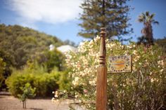 pacheco vineyards - novato, ca. http://shoplocalnovato.com