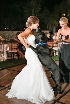 Wedding Pets: Gorgeous Photo Ideas For Your Album ❤ See more: http://www.weddingforward.com/wedding-pets/ #wedding #pets